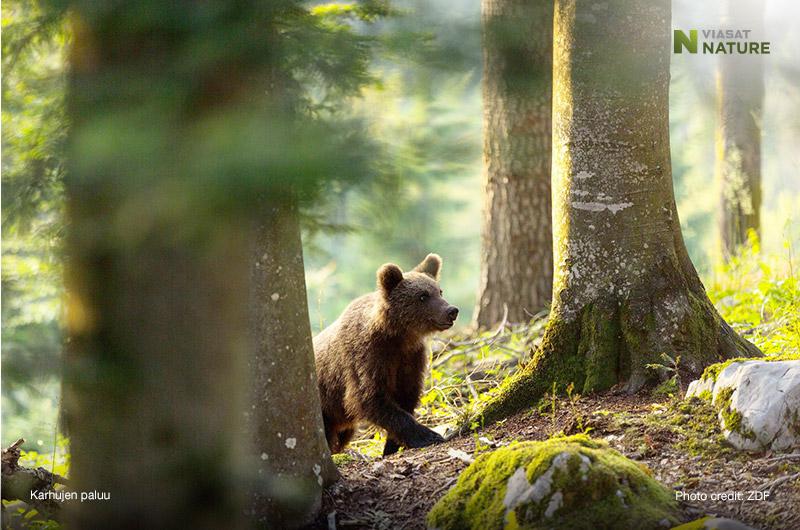 Karhujen paluu Viasat Nature