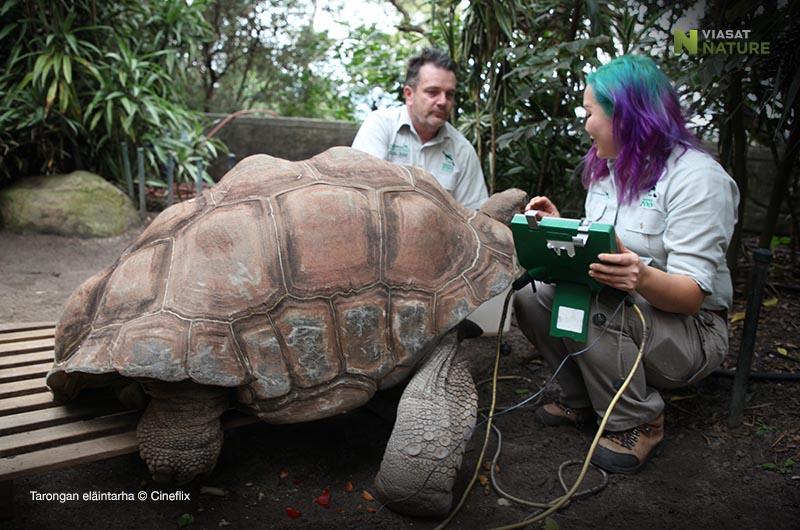 Tarongan eläintarha Viasat Nature