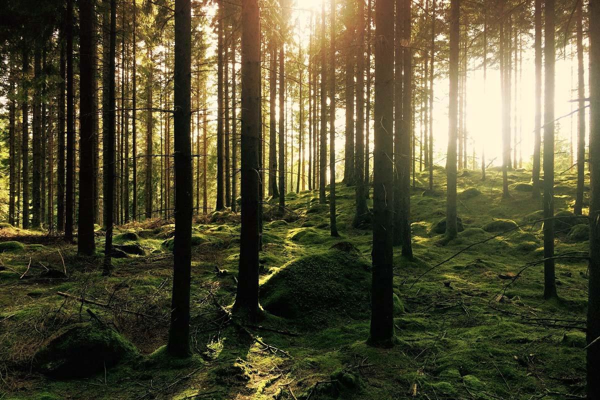 Telian lyhyen aikavälin ympäristötavoitteet