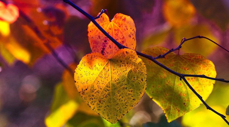 Lokakuun sarjauutuudet